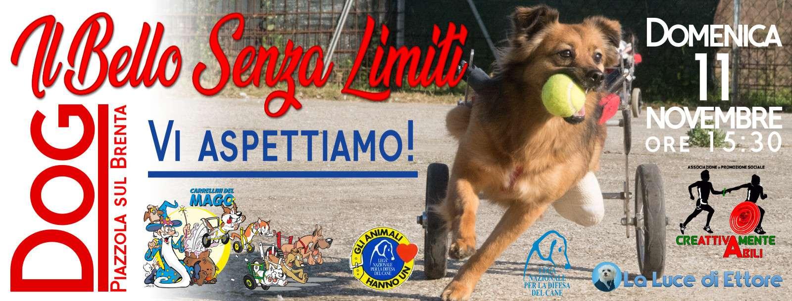 Il bello senza limiti - Dog